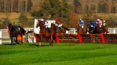 National Hunt Horse Racing  Towcester (standhisround) Tags: uk trees horses horse grass fence northampton racing hurdles racecourse thoroughbred equine towcester racehorses nationalhunt