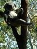 wm47_sydney_20 (WM47) Tags: art beach bondi skyline zoo graffiti coconut sydney australia koala harborbridge amaze beastman streeetart horphe ontre tagspalmtrees