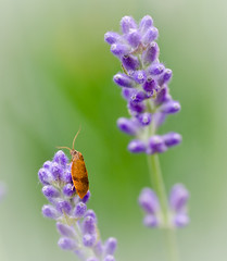 A Wild flower and a friend. (Omygodtom) Tags: summer orange macro green bug insect purple bokeh existinglight tamron90mm d7000 elitebugs