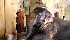 Elefante1 FB