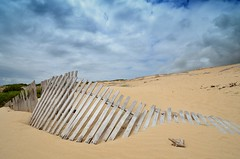 Resistir hasta el final (Testarossa-photo.es) Tags: beach sand dune playa arena tarifa dunas valdevaqueros