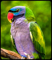 Rainbow Lorikeet - Colorful Bird (JuanJ) Tags: new city travel family pink wedding friends light columbus ohio red party vacation portrait sky people favorite usa white black building cute green bird art beach me nature beauty architecture america square lens landscape jack photography zoo photo interestingness amazing nikon focus friend flickr hanna shot unitedstates bokeh picture location explore national photograph squareformat fav nikkor favs nationalgeographic lightroom iphone d600 jackhanna supershot anawesomeshot iphoneography mygearandme mygearandmepremium mygearandmebronze mygearandmesilver ringexcellence instagramapp