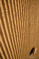alarm-bell.jpg (r.nial.bradshaw) Tags: photo nikon image creativecommons f22 stockphoto stockphotography royaltyfree attributionlicense manualexposure nikond40 1870mmafs lightroom4 rnialbradshaw f22project sunny16basedphotography