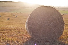 Straw rounds at sunset, Glynde (Annavr6Photography) Tags: field canon landscape harvest straw crop combine hay bale ringmer glynde 5d2 canon5dmkll strawround uploaded:by=flickrmobile flickriosapp:filter=nofilter strawrounds