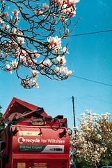 Recycle for Wiltshire, with magnolias (Joybot) Tags: street uk flowers blue red summer england sky flower tree film truck 35mm spring wire bright unitedkingdom bin collection lorry bloom magnolia zenit refuse recycle recycling wiltshire campaign telegraph magnolias dustbin zenith binlorry inbloom trowbridge dustcart colorprint colourprint trashcart