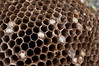 365 Project - 033 - Aug 8, 2013 (crichgraphics) Tags: macro project sigma bee honey 365 105 honeycomb hive comb f28 project365 365project project36533 project365080813 project36508aug13