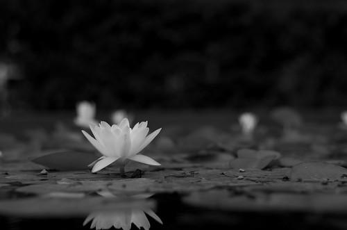 Simplicity ©  Still ePsiLoN