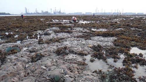 Living reefs of Pulau Semakau