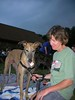 grapehounds07049