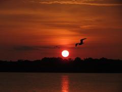 September Sunset (deu49097) Tags: sunset water seagull