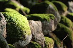Green moss (Hkan Dahlstrm) Tags: green rock skne moss sweden 2013 originalfilter uploaded:by=flickrmobile flickriosapp:filter=original