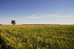 Kel and Brooke take on the West (kelliejane) Tags: sky tree nature field desert wheat harvest australia roadtrip nsw newsouthwales outback agriculture nyngan narromine dubbo cobar gilgandra westernnsw nevertire nymagee westernnewsouthwales kelliejane kgbroadtrip