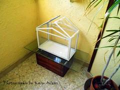 El nuevo rincn de casa (Karu Aileas) Tags: ikea corner greenhouse rincn invernadero