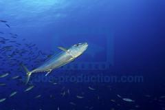 2014 01 VOISIN MALDIVES-5442