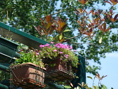 fiori a CASIER  fronte SILE (aldofurlanetto) Tags: fiori casier frontesile