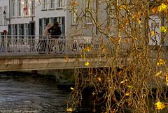 Beloved Brugge (Natali Antonovich) Tags: belovedbrugge brugge bruges belgium belgie belgique pensiveautumn autumn platan tree bridge couple pair bikes lifestyle tradition oldtown