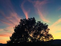 The setting sun making silhouettes (Starrgalla) Tags: sky clouds cloud evening dusk dark branches branch treesilhouette tree silhouettes silhouette sunset settingsun