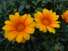 (MonseValentina) Tags: yellow flor flower flowers flores green natural nature naturaleza primavera outside amazing beautiful cute small colors