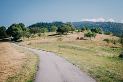 The Gernsbach Trail (freyavev) Tags: nature landscape horses blackforest schwarzwald badenwrttemberg deutschland germany vsco canon outdoor outdoors hiking field road
