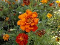2016-08-14-6616 (vale 83) Tags: flower nokia n8 friends macrodreams colourartaward