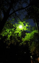 A light in the night (siong.lewis) Tags: urban streetscape trees streetlight night