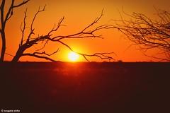 Sunrise in Uluru (Explored) (Sougata2013) Tags: