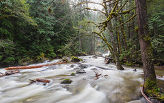 River Sounds (John Westrock) Tags: forest nature river longexposure trees deceptionfalls washington pacificnorthwest canoneos5dmarkiii canonef1635mmf4lis