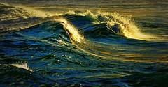 DSC_0131 Golden waves (Rodolfo Frino) Tags: sea ocean waves australia sydney goldenhour gold golden goldenlight goldenwaves seawave