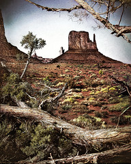 Impression: Monument Valley (D'ArcyG) Tags: monumentvalley juniper tree gnarly framed southwest usa impression