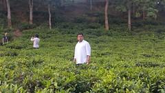 Tea estate, lakkatura, Sylhet, Bangladesh. (Ahmed Afgani) Tags: lakkatura sylhet bangladesh tea estate rubber