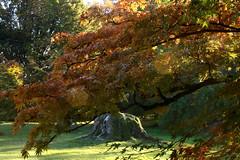 branche d'automne (tacitasylvaine) Tags: flickrunitedaward