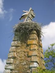 30491977165_e0b50c29e7_k (photoAKM/Ainars Meiers) Tags: heights theheavens heaven stork family latvia latgale europe eu ec signs high monitoring