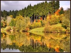 Herbstfarben am Leinecksee (almresi1) Tags: spiegelung see lake leinecksee welzheim tannen wood wald autumn herbst