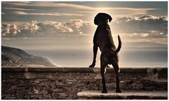 Ettore the.....sentinel (lorenzoorsini2) Tags: doggi portrait tamron lorenzoorsini calabria fiumefreddobruzio ettore