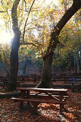Troodos Geopark (35) (Polis Poliviou) Tags: polispoliviou polis poliviou   cyprus cyprustheallyearroundisland cyprusinyourheart yearroundisland zypern republicofcyprus  cipro  chypre   chipir chipre  kipras ciprus cypr  cypern kypr  sayprus kypros polispoliviou2016 troodosgeopark troodos mediterranean nicosia valley life nature forest historical park trekking hiking winter walking pine pines prodromos limassol paphos fall autumn geopark kakopetria