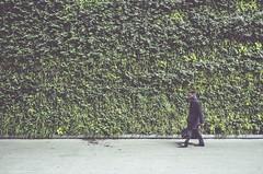 Intersection (dpakisgood) Tags: fujixmount travel uk london man architecture design urbanplanning nature plants green verticalgarden