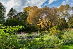(Clint Everett) Tags: fall autumn nature garden flowers landscape sony zeiss sourceclinteverett