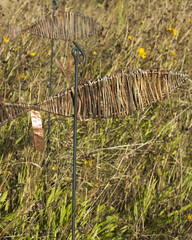 Straw Salmon navigating a sea of wild flowers - 4 (Rod Raglin) Tags: salmon strawsalmon wildflowers threatened fishing fish fragile mountainviewcemetery vancouver