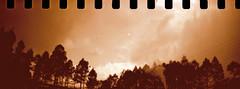 la forêt (vinskatania) Tags: lomographysprocketrocket lomosprocketrocket sprocketrocket believeinfilm staybrokeshootfilm filmphotography lomography sephia t400cn