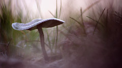 Dream (ppaschka) Tags: pilz frost frozen kalt cold winter eis ice gras mushroom fungus canon 700d sigma 70300mm macro makro