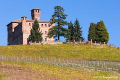 Le Langhe (beppeverge) Tags: barolo beppeverge colline dolcetto grapes italy landscape langhe moscato paesaggio roero uva vigna vigneti vineyard vino vitigni wine dianodalba piemonte italia it