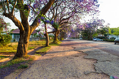 Jacaranda (tino1b2be) Tags: jacaranda mutare zimbabwe fullbloom bloom flour nature car street