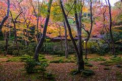 momiji '16 - autumn foliage #3 (Gio-ji temple, Kyoto) (Marser) Tags: xt10 fuji raw lightroom japan kyoto sagano temple autumnleaves fallenleaves moss autumn red