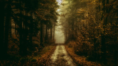 November (Bokehschtig (ON/OFF)) Tags: forest wald autumn fall herbst path pathway pathinthewoods woods woodland timber timberland trees treemendous dark haunted forestscape bayern bavaria germany deutschland gloomy murky somber painting