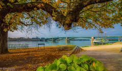 Autumn walk (MF-otografie) Tags: autumn fall river tree leaves nature city landscape outdoor