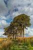 Kippen Pines (1) (Shuggie!!) Tags: clouds grasses hdr kippenmuir landscape morninglight pine scotland stirlingshire trees zenfolio karl williams karlwilliams
