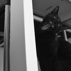 Cat (Leonardo Garre) Tags: gato mascotas