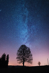 The Shining Tree ... (Rogg4n) Tags: nightphotography voielacte astrophotography tree astro longexposure sigma1835mmf18dchsm night milkyway star nightscape skyscape canoneos80d silhouette arbre nature shootingstar fillingstar suisse switzerland chauxdefonds neuchtel landscape autumn fall 2016 november stars