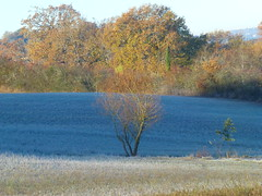 (domclavaud) Tags: auch gers automne paysage froid nature occitanie givre arbre