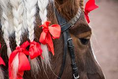 Christmas horse (Maria Eklind) Tags: bosjkloster castle julmarkand slott hr bosjklosterslott christmas sweden december skneln sverige se